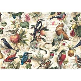 Papel Kartos Aves y Frutas 50x69cm